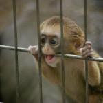 今見られる!上野動物園の赤ちゃん(1)ブラッザグェノン