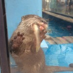 ピンチ!魚がのどにつまるジーノ(サンシャイン水族館)