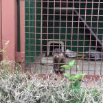 ロンリーカワウソ。まっちゃちゃん。(東武動物公園)