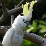 アオメキバタンのアンナ(上野動物園)
