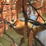 自然教育園(目黒)の野鳥