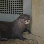 コツメカワウソと握手!市川市動植物園
