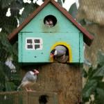 寒サニマケズ文鳥たち(麻溝公園ふれあい動物園)