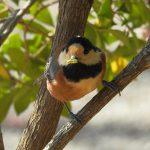 明治神宮の野鳥