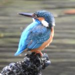 浜離宮恩賜庭園の野鳥