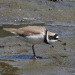 葛西臨海公園の野鳥