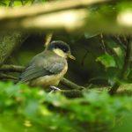 5月の明治神宮の野鳥
